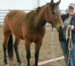 River, aka AR I'll Be Powderific, 3 year old AQHA filly